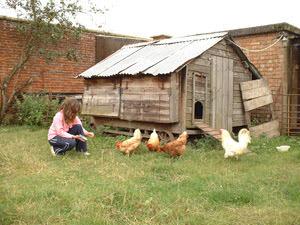 Bradford City Farm