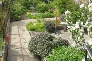 The Edible Roof Garden