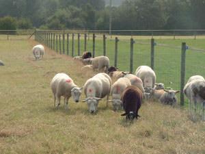 Jeolotts Hill Research Station Farm
