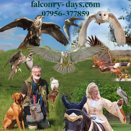 Bob Edwards T/A Falconry-Days.Com