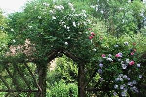 Rose Cottage (Bodmin)