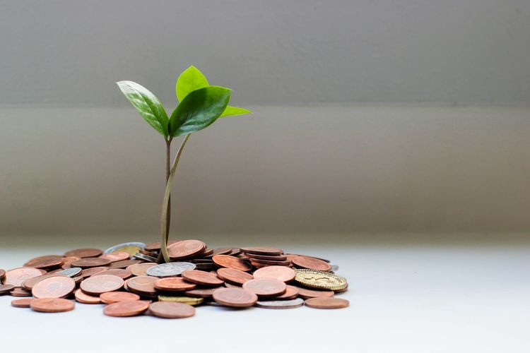 Green plant, grey background planted in ground of coins
