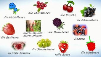 Ягоды на немецком