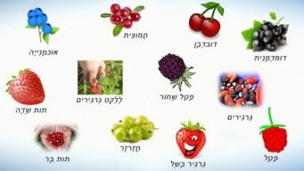 Ягоды на иврите