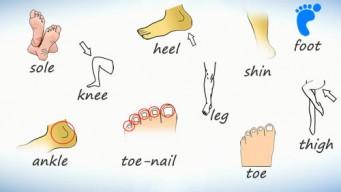 Нога на английском