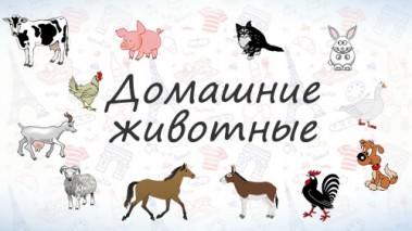 Домашние животные на французском