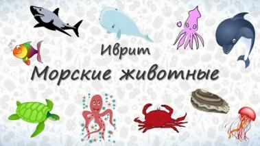 Морские животные на иврите.