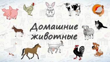 Домашние животные на немецком.