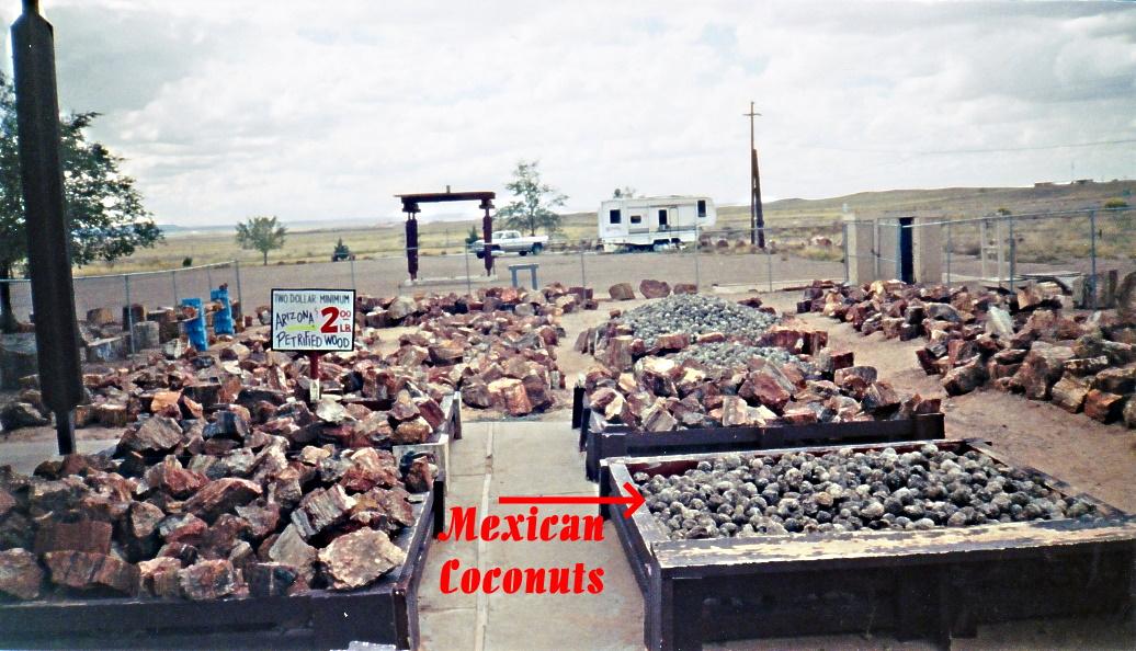 PetCoconuts