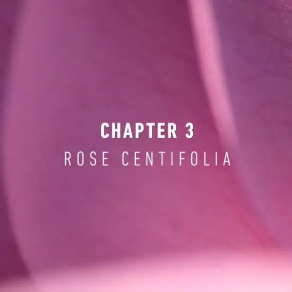 NaturalsTogether™ Chapter 3: Rose Centifolia