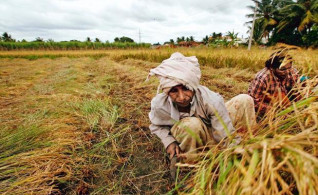Image thumbnail for challenge entitled Agriculture Assessment - India