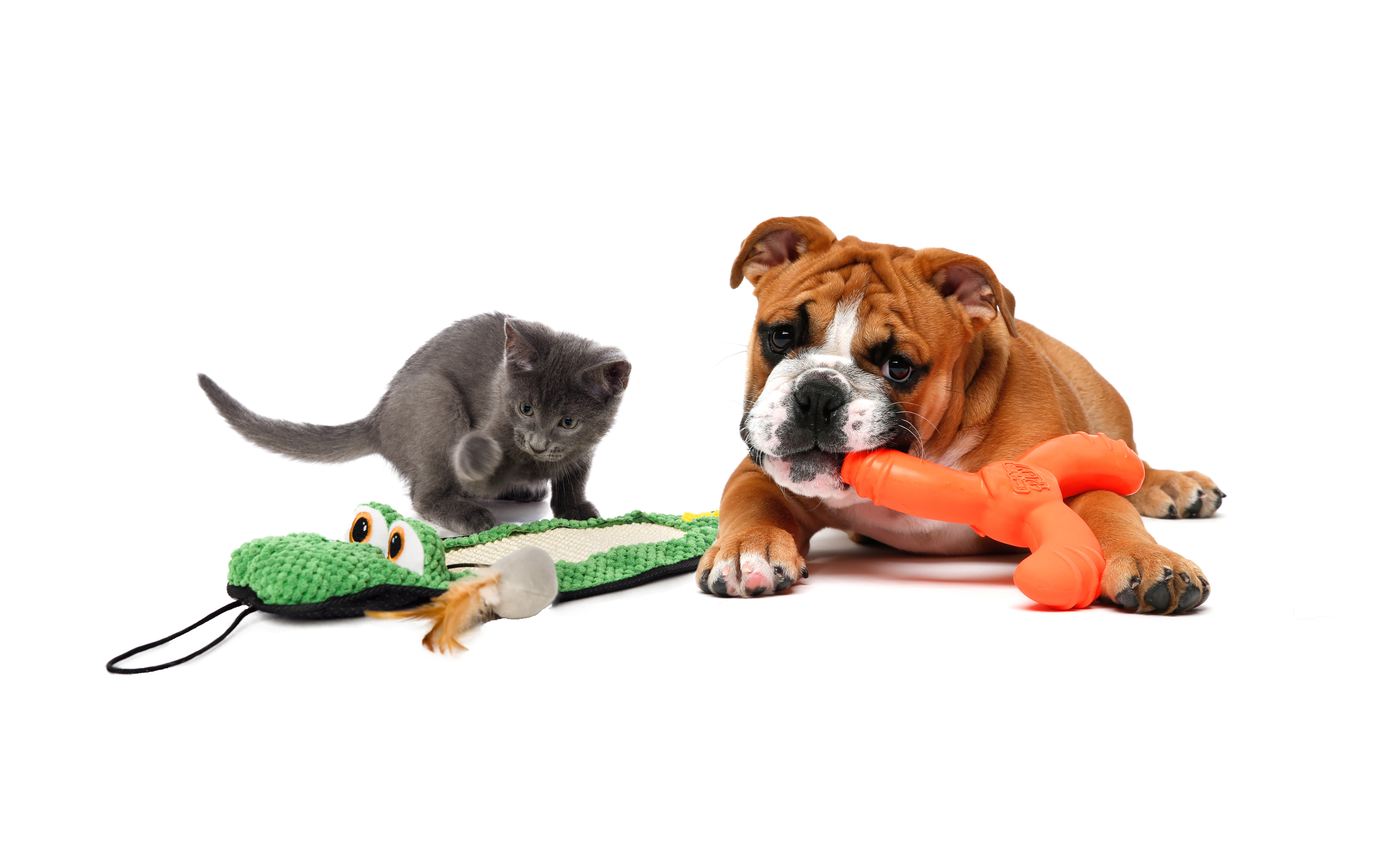 Enjoy a Free Toy for Your Pet From Hartz!