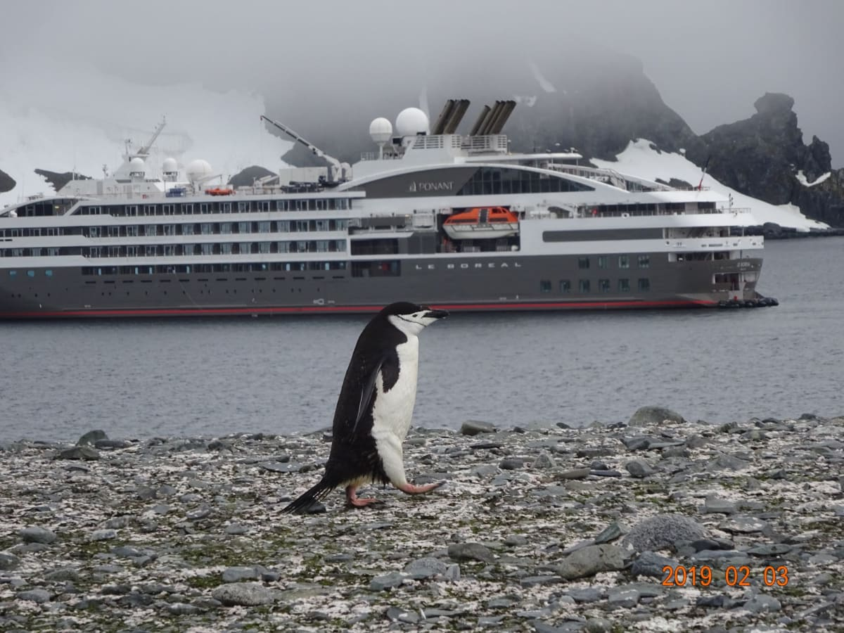 ヒゲペンギンと船