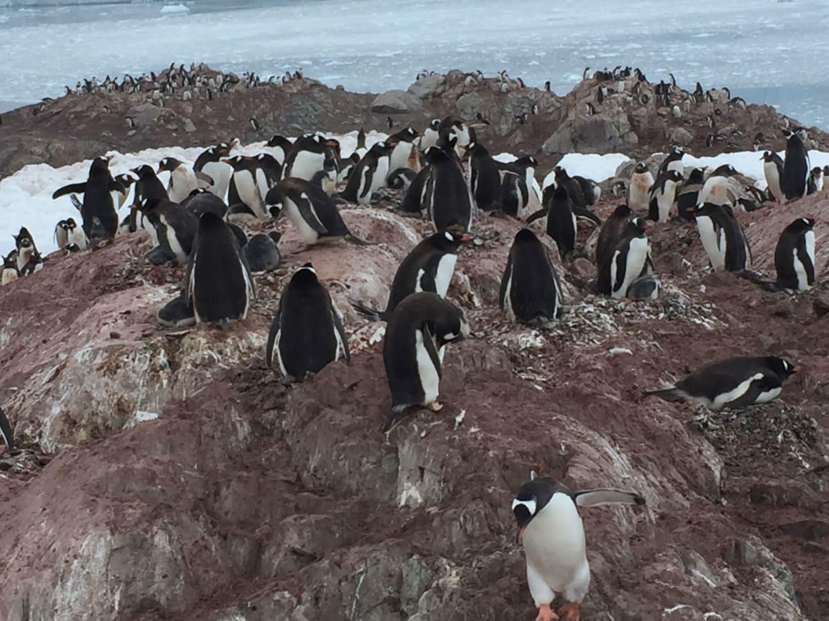 ゼンツーペンギンが沢山います。