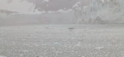 ホーランドアメリカフォーレンダム乗船記—氷河の崩落音を聞ける旅