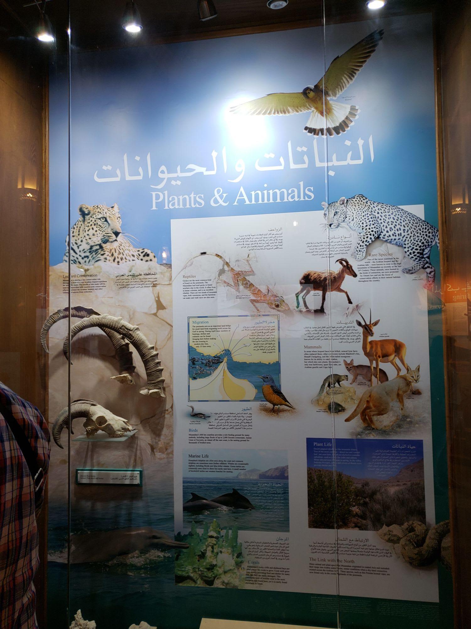 博物館の動物紹介