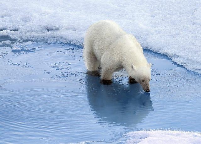クリスタル・クルーズ、北西航路クルーズで北極エキスパートチーム招集