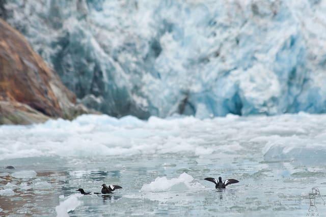 リンドブラッド・エクスペディション、エンジントラブルで南極クルーズを複数キャンセル