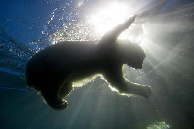 クオーク・エクスペディション、2019年夏の北極圏プログラムを発表