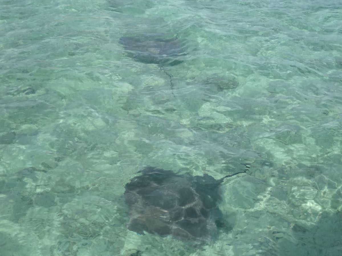 ボラボラ島 一緒に泳ぎ触らせてくれたエイ | ボラボラ島(フランス領ポリネシアーソシエテ諸島)