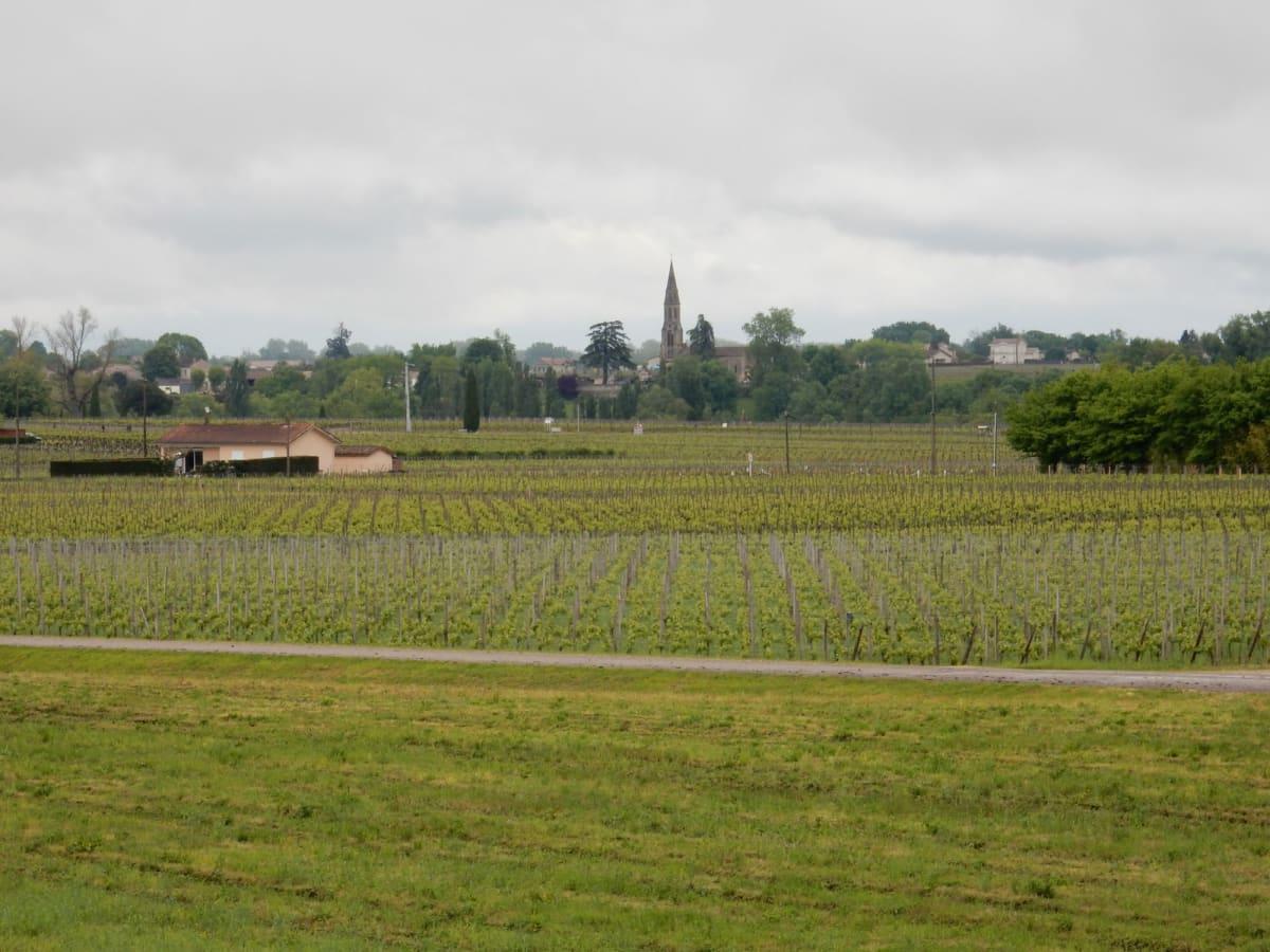 Day7#サンテミリオン近郊のブドウ畑