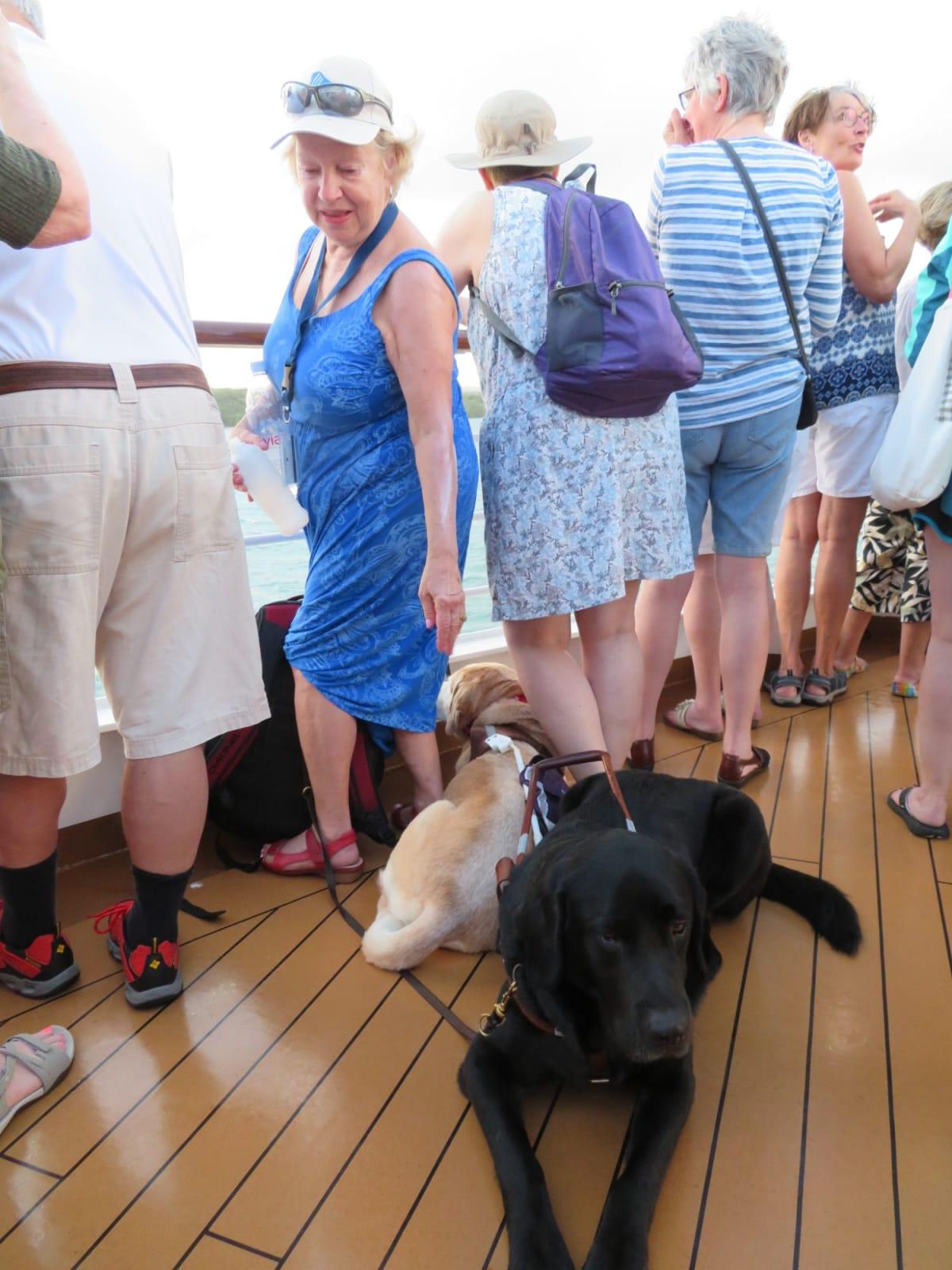 介助犬もパナマ運河見物 | 客船ニュー・アムステルダムの乗客