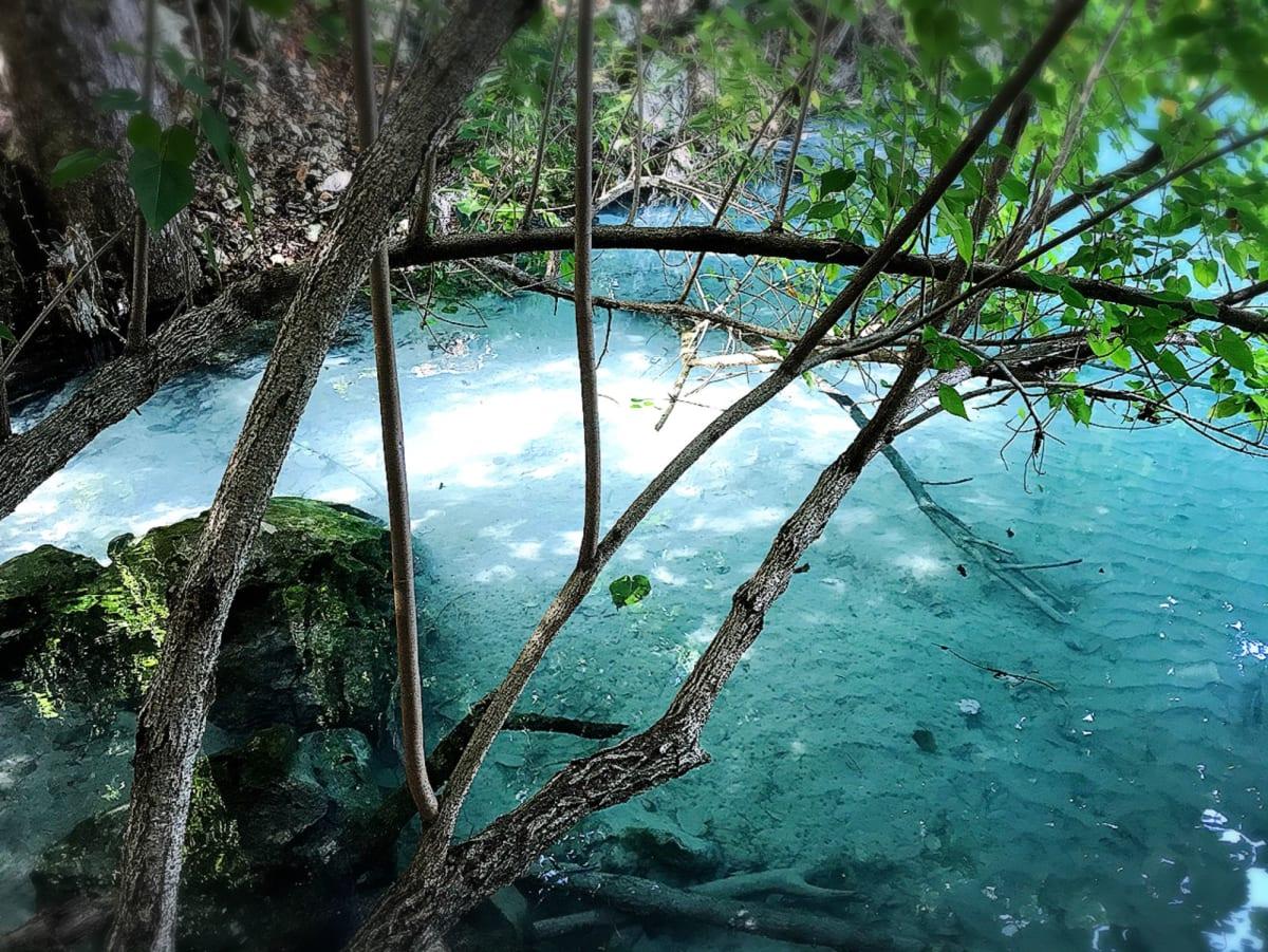 ハイチの村にて。マングローブの生えてる汽水域。水の透明度が見事! | ラバディ