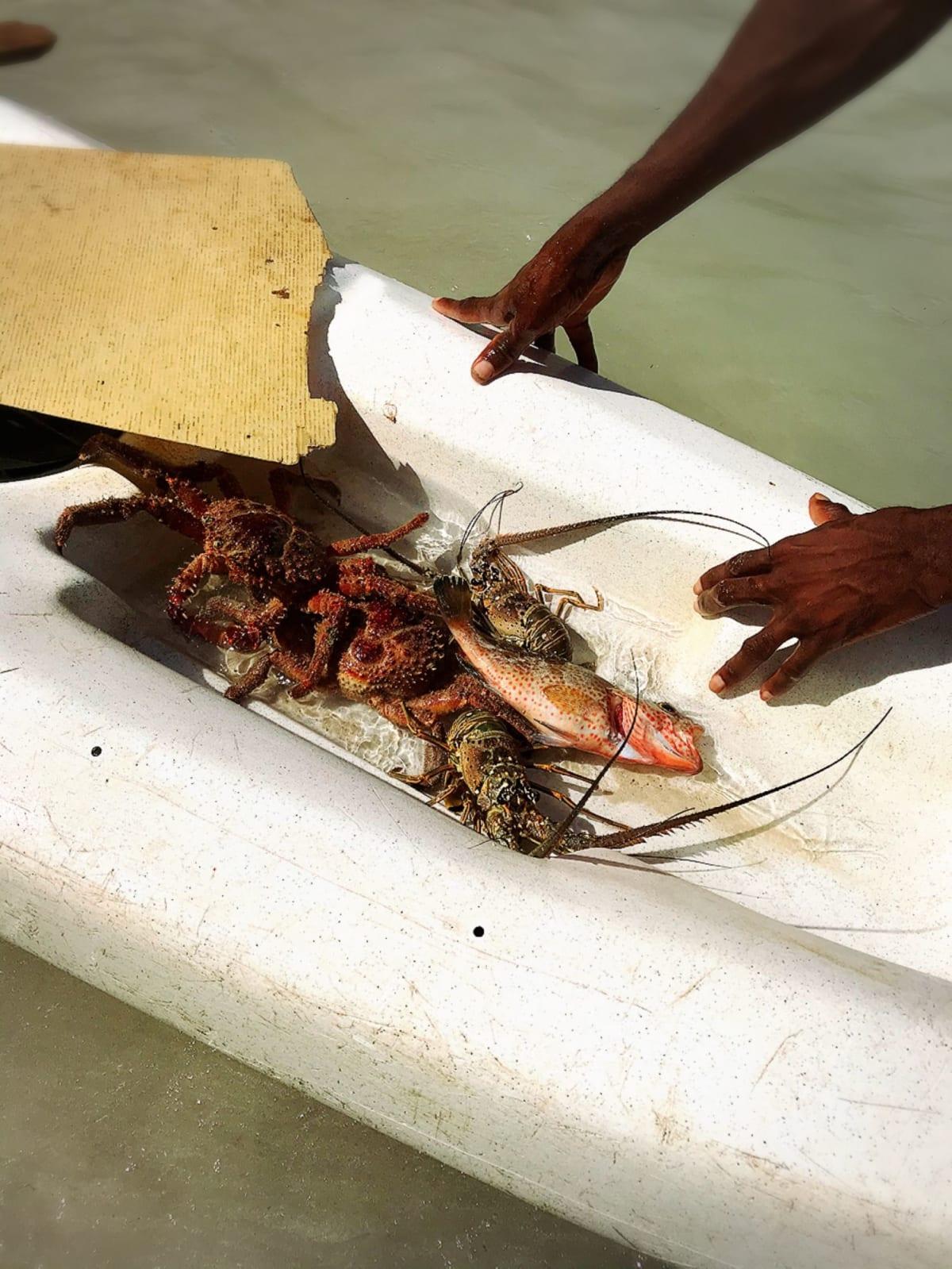 ハイチの村にて。採れたてのカニ、ロブスター、魚。撮影にチップを2ドル(2人だったので1人1ドル) | ラバディ