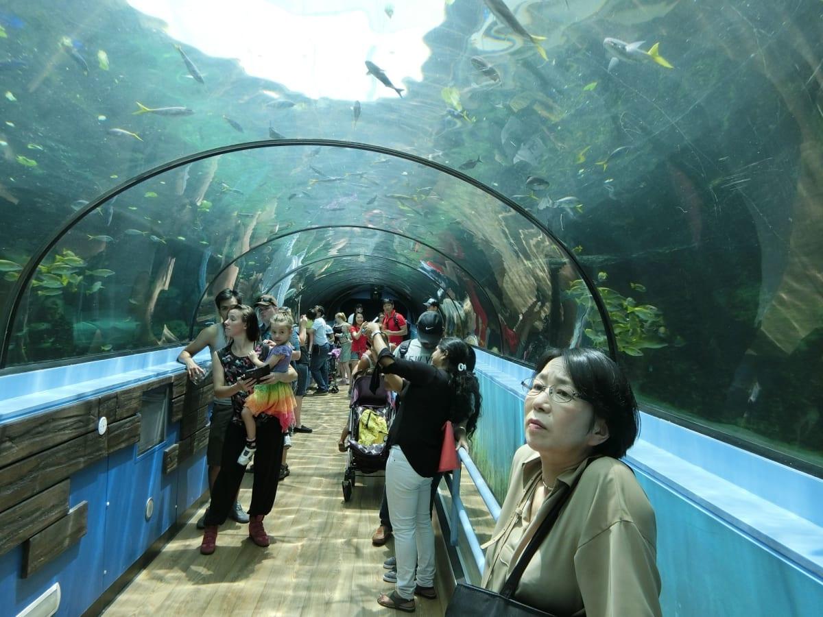 シドニー水族館   シドニー