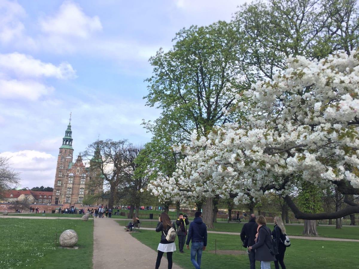 コペンハーゲンの桜 | コペンハーゲン