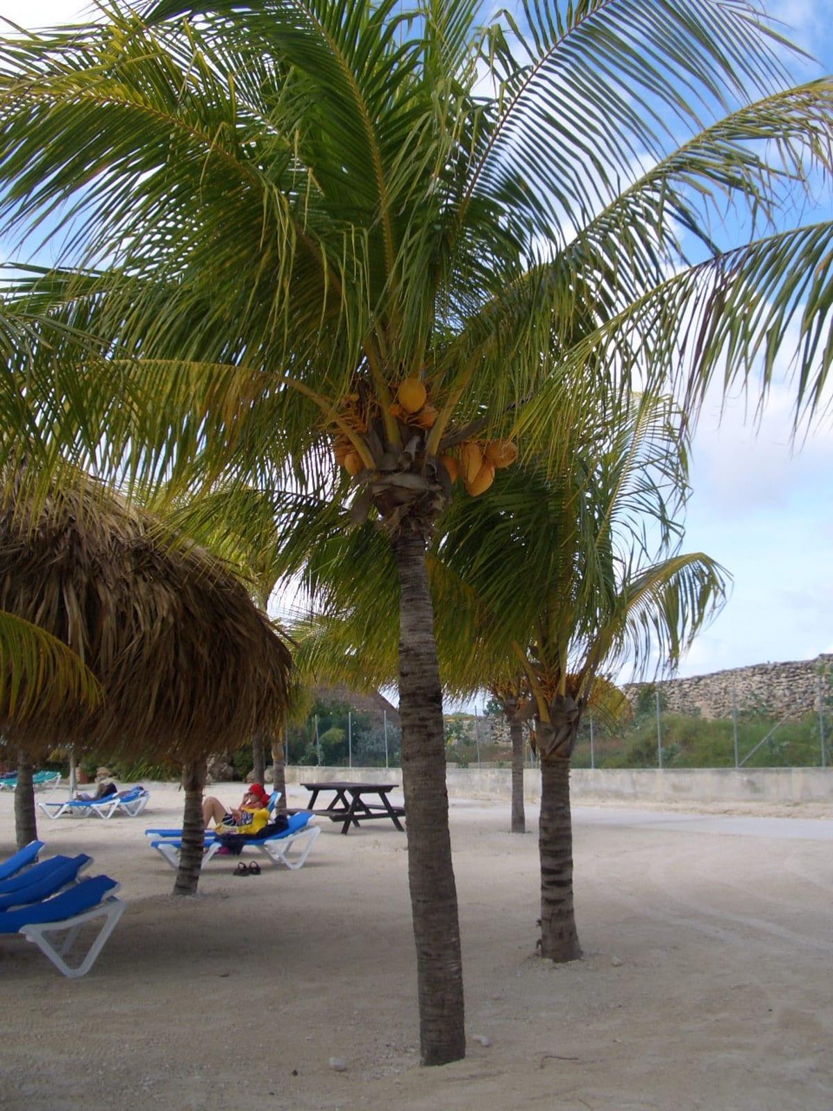 プリンセスのプライベートビーチ のんびり!! | プリンセス・ケイ(エルーセラ島)