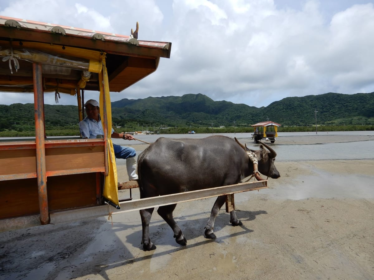 水牛に乗ってまったり・のんびり。 テンダーボートの最終乗船に間に合わせるため、短めの ツアーを利用。 (個人で観光する場合は時間厳守です)