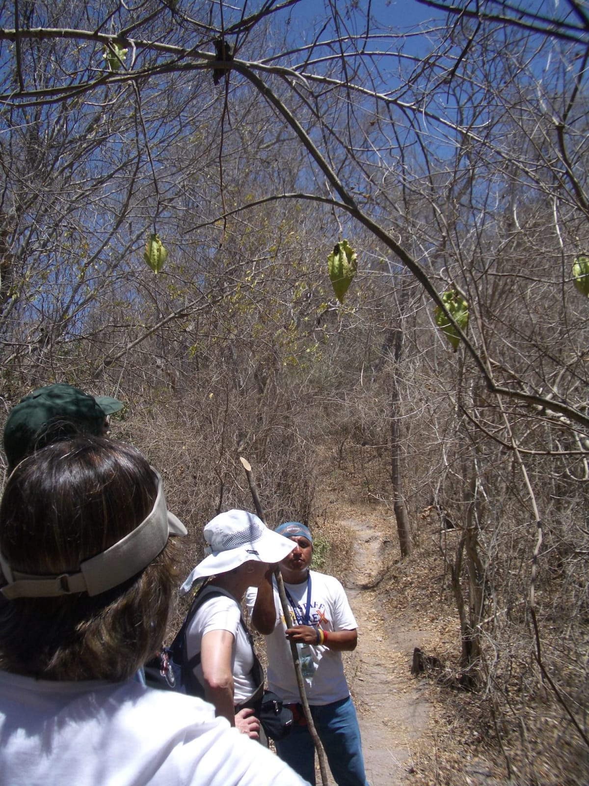 自然観察ハイキングツアープエルトパジャルタ(メキシコ) | プエルト・バジャルタ