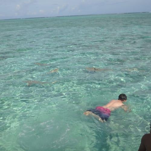 ボラボラ島 鮫と一緒に泳ぐ | ボラボラ島(フランス領ポリネシアーソシエテ諸島)