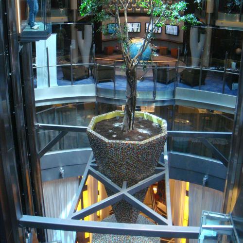 その鉢植えの木を横上から見る。 | 客船セレブリティ・イクノスの船内施設