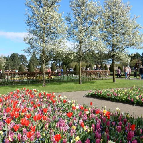 Day7#アムステルダム#キューケンホフ公園#桜とヒヤシンスとスイセンとチューリップ | アムステルダム