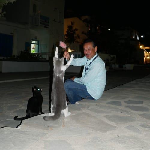 持参した猫じゃらしに大喜び | ミコノス島