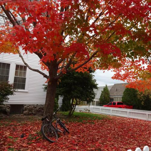 なんといっても、この紅葉!!! 言葉はいらない⁉ | ボストン(マサチューセッツ州)