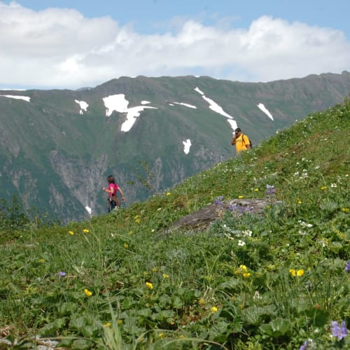 ツアーの後はクルーズ船停泊のすぐ近くからロバーツ山頂上までケーブルカーで登り、お花畑のハイキング | ジュノー(アラスカ州)