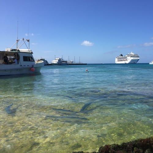 ケイマン諸島の港。魚がたくさんいました。 | ジョージタウン(ケイマン諸島)