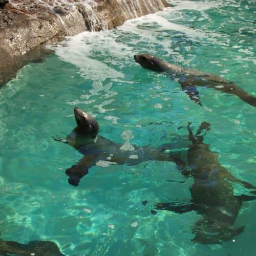 気軽にアシカの泳ぎを見て、一息入れます。