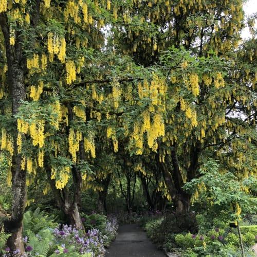 バンデューセン植物園(バンクーバー)、元ゴルフ場。 西洋式公園は、日本の詫び寂の趣とは、真逆の世界ですね。 | バンクーバー(ブリティッシュコロンビア州)
