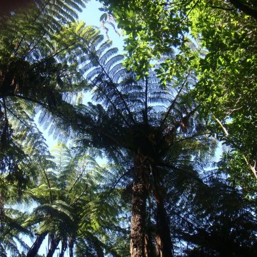 ニュージーランドらしいシダが茂る。 | タウランガ