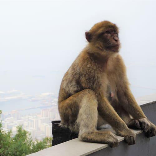 上ったらいきなり猿。そして船。 | ジブラルタル