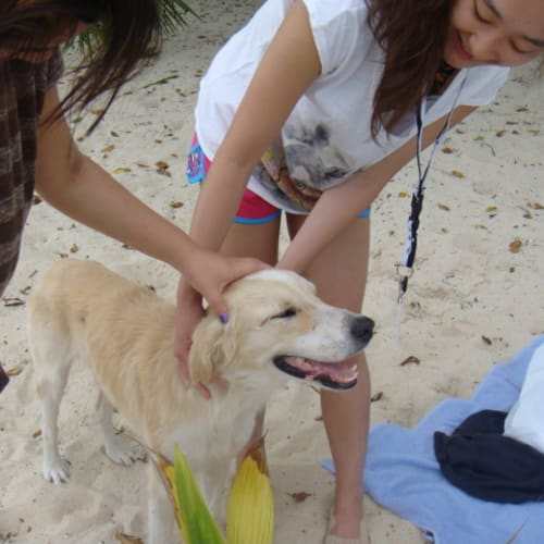 10日 ビーチには犬もいて、みんなに可愛がられていた。   ドラビューニー島
