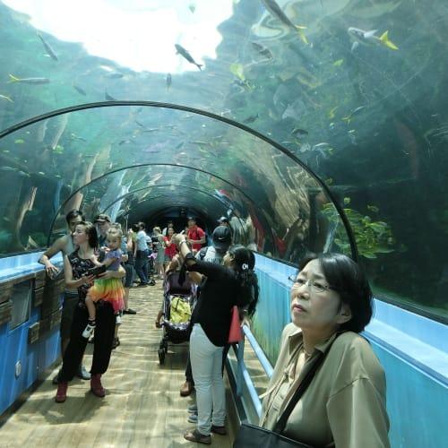 シドニー水族館 | シドニー