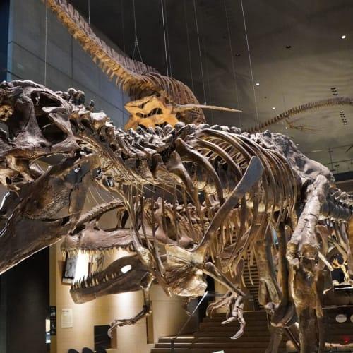 北九州の「いのちのたび博物館」展示物。