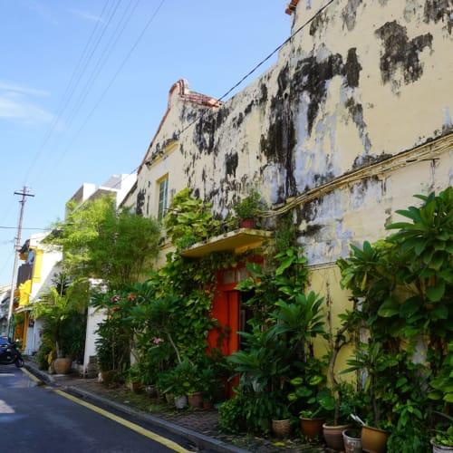 裏通りに行くとジャングル化した植木に囲まれた家が並びます。