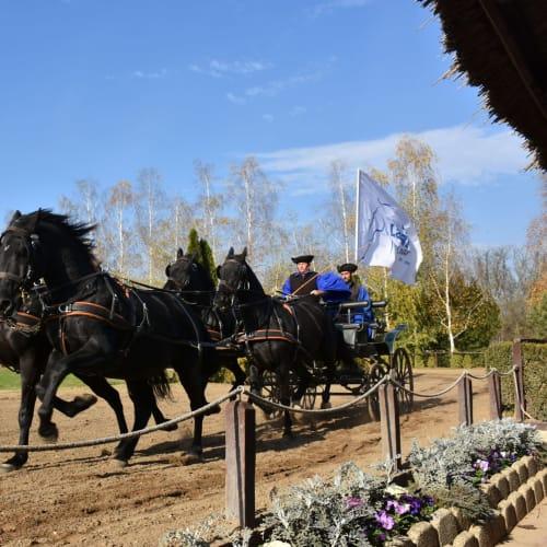 ブタペストの騎馬ショー | ブダペスト