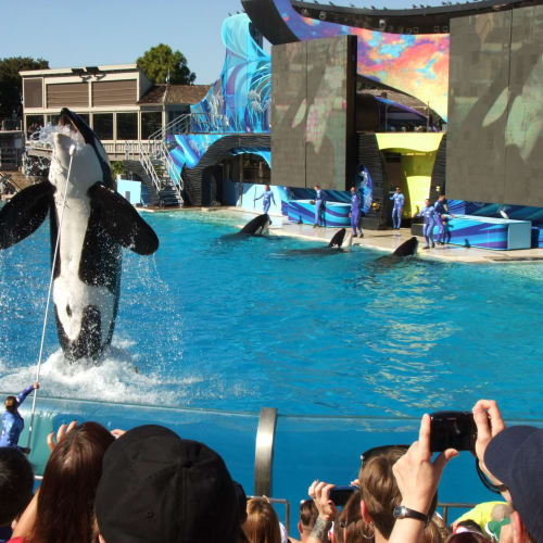 次に見たのはシャチのショーです。イルカと同様、大きくて賑やかな会場でした。